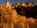 Grove of Aspen Trees Below Chimney Rock, Colorado Fotoprint van Willard Clay