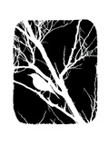 Hvit fugl Plakat av Ricki Mountain