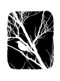 Weißer Vogel Kunstdruck von Ricki Mountain