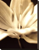 Radiance III Toile tendue sur châssis par Cinzia Ryan