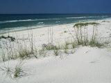 Dune Grasses Hold White Sand in Place Along a Stretch of Beach Valokuvavedos tekijänä Raymond Gehman