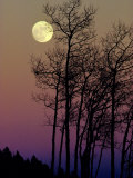 A Full Moon Shines on Winters Leafless Branches Impressão fotográfica por George F. Mobley