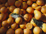 An Abundance of Oranges Photographic Print by Bill Curtsinger
