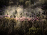 Misty View of a Forested Hillside Photographic Print by Sam Abell