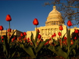 View of the Capitol Building Photographic Print by Sam Kittner