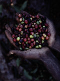 Coffee Beans Photographic Print by Sam Abell