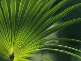 Close View of a Palm Frond Fotografisk tryk af Klaus Nigge