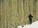 Man on Skis Touring an Aspen Glade in the Snow Fotografisk tryk af Kate Thompson