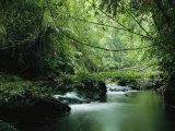 A Woodland Stream Winding Through a Burmese Jungle 写真プリント : スティーブ・ウィンター