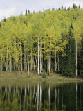 Autumn Colored Aspen Trees Cast Reflections in a Lake Photographic Print by Gordon Wiltsie