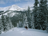 Backcountry Skiing into an Evergreen Forest Stampa fotografica di Tim Laman