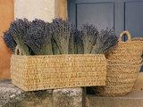 Basket Full of Herbs Fotografisk tryk af Nicole Duplaix
