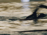 A Swimmer Does the Crawl Lámina fotográfica prémium por Bremner, Dugald