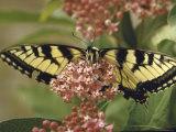 Close Up of Butterfly on Flower Fotoprint van Alfred Eisenstaedt