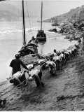 2 Rows of Chinese Trackers Plodding Along Bank of Yangtze River Towing a Junk Slowly Up River Photographic Print by Dmitri Kessel