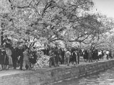Crowds at the Cherry Blossom Festival Photographic Print by Thomas D. Mcavoy