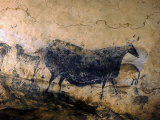 Lascaux Cave Drawing Depicting Steer, Circa 15,000 BC Photographic Print by Ralph Morse