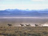 Band of Wild Horses Taking Flight Across Western Sage Lámina fotográfica por Bill Eppridge