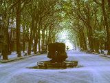 Plane Trees Shade Wide Boulevard of Cours Mirabeau in Aix En Provence Fotografie-Druck von Gjon Mili