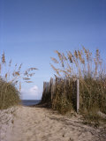 Sea Oats Line the Path to the Beach on the Outer Banks Fotografisk tryk af Taylor S. Kennedy
