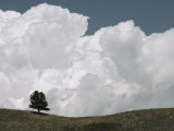 A Lone Ponderosa Pine Tree under a Cloud-Filled Sky Photographic Print by Annie Griffiths Belt