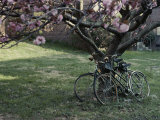 Spring Flowers Frame Two Bicycles Chained to a Tree Reproduction photographique par Stephen St. John