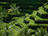 Scenic Valley with Rice Fields in Balis Central Highlands Impressão fotográfica por Paul Chesley