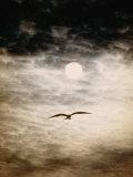 Une frégate se profile sur un ciel diurne aux lueurs étranges Reproduction photographique par Paul Chesley