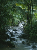 A View of a Tropical Stream in El Yunque, Puerto Rico Premium fototryk af Taylor S. Kennedy