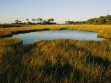 Salt Marsh, Assateague Island, Virginia Fotografie-Druck von Skip Brown