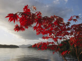 Un árbol de arce con los colores del otoño enmarca una vista del puerto de Barnard Lámina fotográfica prémium por Nowitz, Richard