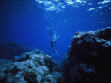 Spearfishing in the Bay Photographic Print by Randy Olson