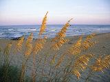 Plage avec avoine de mer en gros plan Reproduction photographique Premium par Steve Winter
