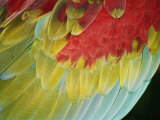 A Close View of the Wing of a Macaw Stampa fotografica di St. John, Stephen