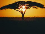 Sunset and Trees, Serengeti Plains, Tanzania Reproduction photographique par Skip Brown