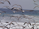Seagulls Fly over Surf Photographic Print by Raul Touzon