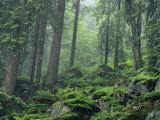 Des rochers moussus couvrent un flanc de coteau boisé enveloppé de brume Reproduction photographique par Norbert Rosing