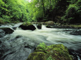 Woodland Stream and Rapids, Time Exposure Fotografisk tryk af Norbert Rosing