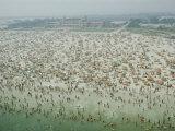 Crowds of People at Jones Beach 写真プリント : ロバート・シッソン