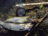 A Pair of Cutthroat Trout, Salmo Clarki, and a Reel Lie on a Bank Fotografie-Druck von Bill Curtsinger