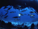 A Diver Passes by a School of Tarpon Near an Underwater Arch Impressão fotográfica por Bill Curtsinger