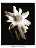 Portrait in White II Poster af John Rehner