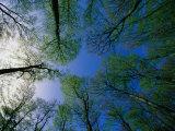 Deciduous Forest in Spring,, Sweden Reproduction photographique par Anders Blomqvist