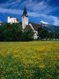 Field of Flowers in Front of Burg (Castle) Gutenburg and Church, Balzers, Liechtenstein Photographic Print by Martin Moos