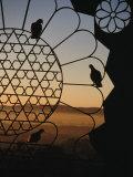 Birds Resting on Lattice Window, Jaipur, Rajasthan, India Photographic Print by Jane Sweeney