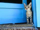 Kitten Standing in Doorway, Apia, Samoa Photographic Print by Will Salter