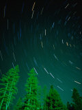 Star Trails and Pine Trees in Night Sky, Montana, USA Photographic Print by Gareth McCormack