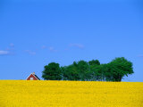 Bright Yellow Rapefields and Red Roofed Farmhouse on the Kulla Peninsula, Skane, Sweden Reproduction photographique par Anders Blomqvist
