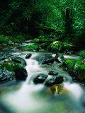 Liwagu River at Kinabalu National Park, Sabah, Malaysia Fotoprint av Mark Daffey