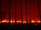 Forest Floor Fire in Teak Plantation, Playa Negra, Costa Rica Fotoprint av Brent Winebrenner